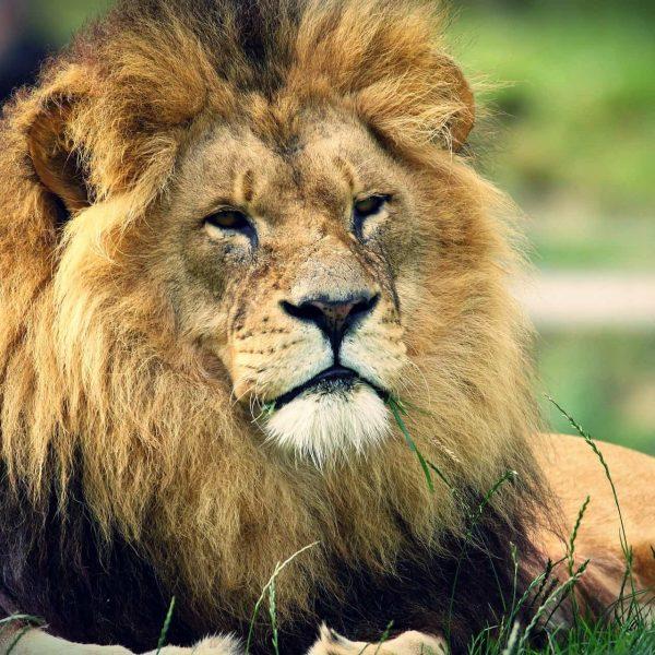 מאלף האריות – טיפ לשיפור פרודוקטיביות בעבודה