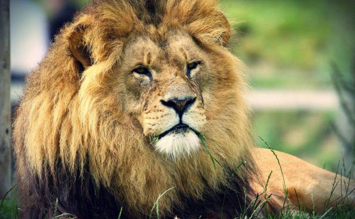 מאלף האריות – איך להיות יותר פרודוקטיבי בעבודה